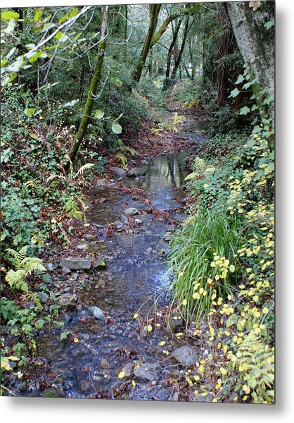 Creek On Mt Tamalpais 2 Metal Print