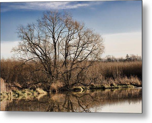 Creek Tree Metal Print