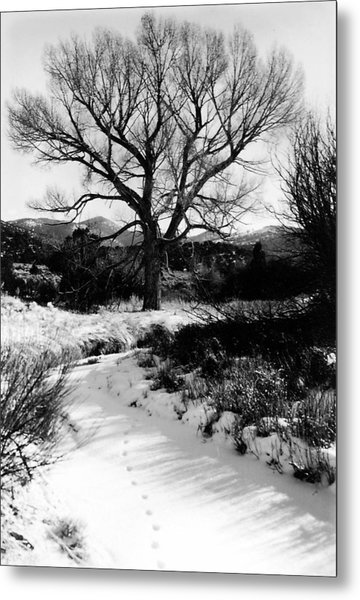 Creekside Winter Metal Print