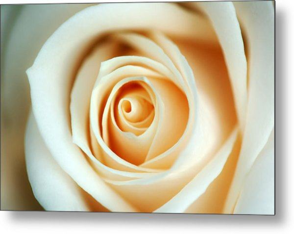 Creme Rose Metal Print by Mandy Wiltse