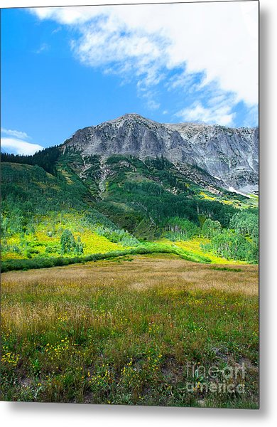 Crested Butte Aspens Metal Print