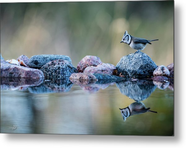 Crested Tit's Reflection Metal Print