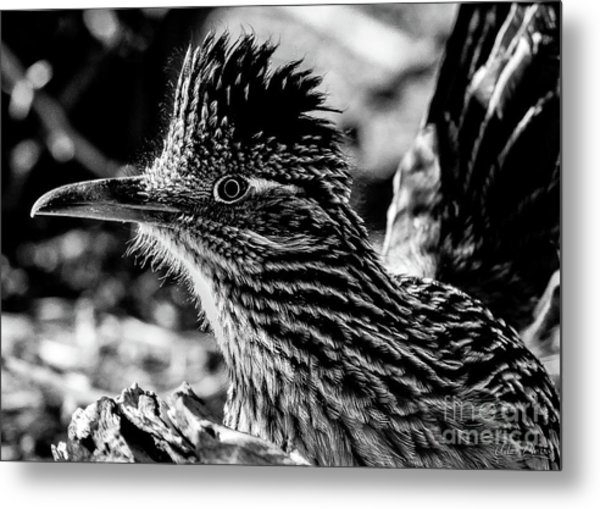 Cresting Roadrunner, Black And White Metal Print