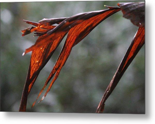 Crimson Leaf In The Amazon Rainforest Metal Print