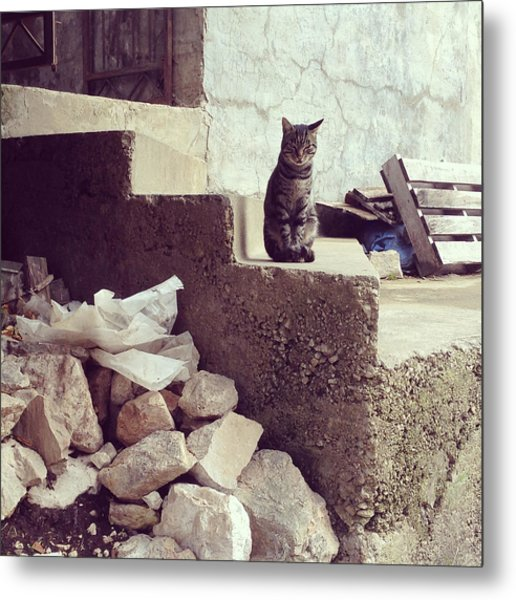 Croatian Cat Metal Print
