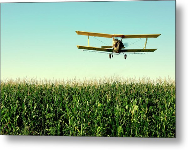 Crops Dusted Metal Print
