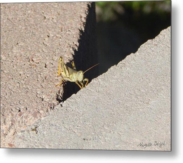 Cross Over Grasshopper Metal Print