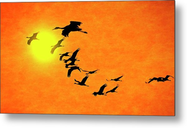 Crossing The Sun, Sandhill Cranes Metal Print