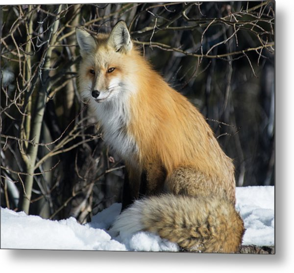 Crossroads With A Red Fox Metal Print