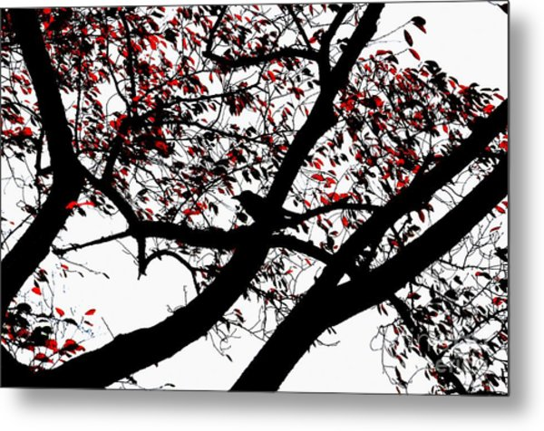 Crow And Tree In Black White And Red Metal Print