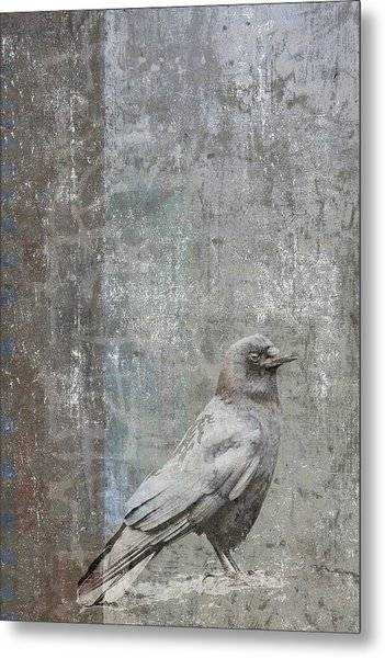 Crow In Grey Flannel Metal Print