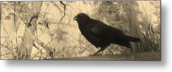Crow Metal Print by Tracy Fallstrom