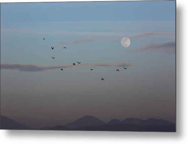 Crows Coming Home To Roost Metal Print by Robin Street-Morris