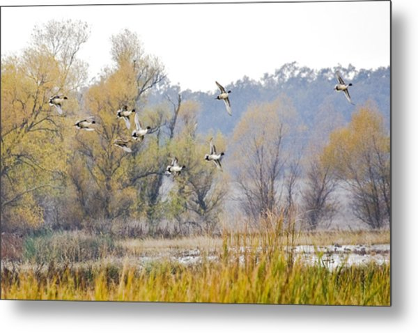 Cruising The Pond Metal Print by Charlie Osborn