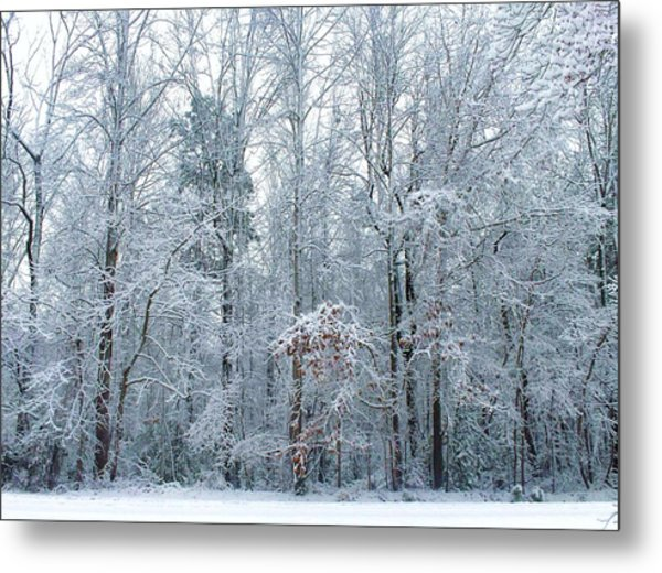 Crystal Forest Metal Print by Jeanette Stewart