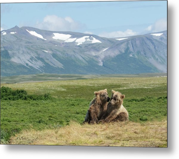 Cubs Playing On The Bluff Metal Print