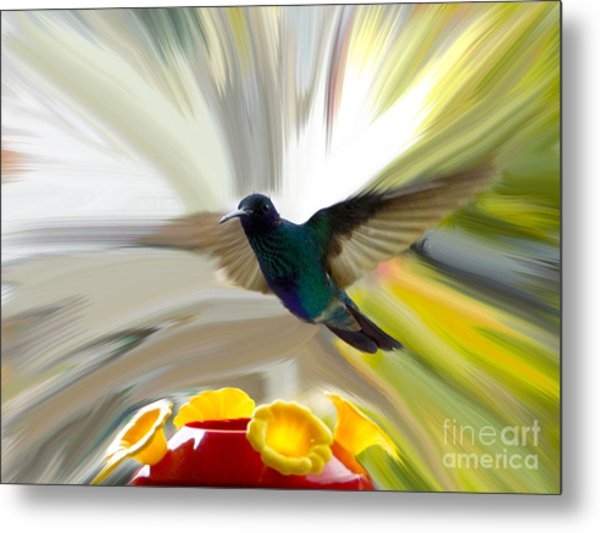 Cuenca Hummingbird Series 1 Metal Print