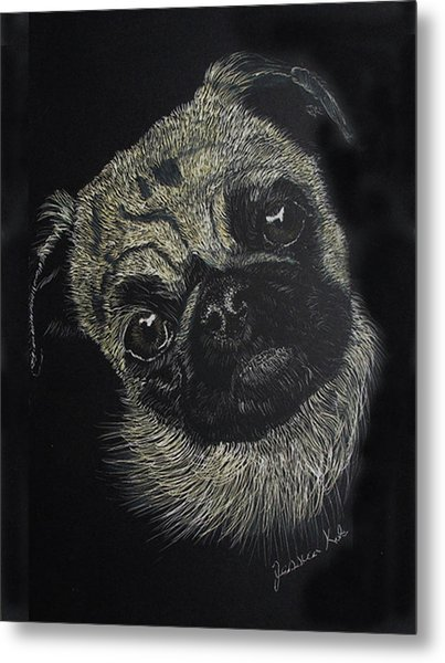 Curiosity Of The Pug Metal Print by Jessica Kale