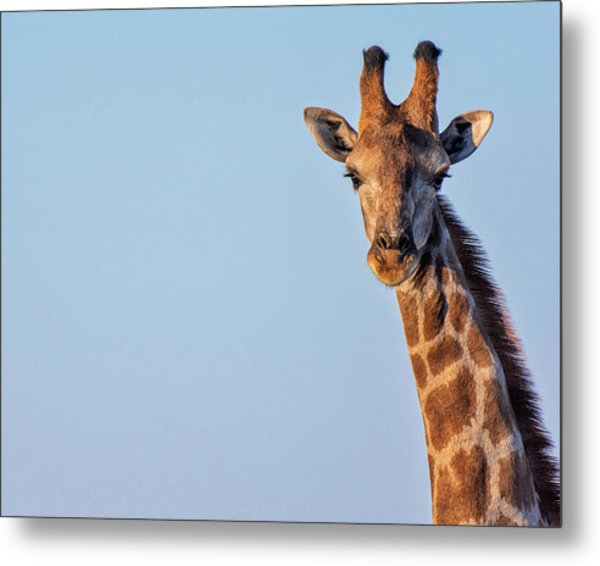 Metal Print featuring the photograph Curious 1 by Rand