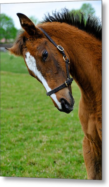 Curious Baby Metal Print by Pat Shawyer