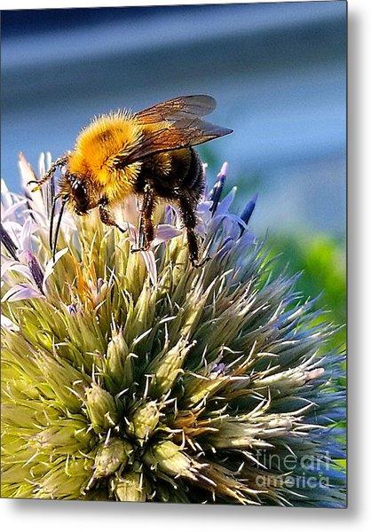 Curious Bee Metal Print