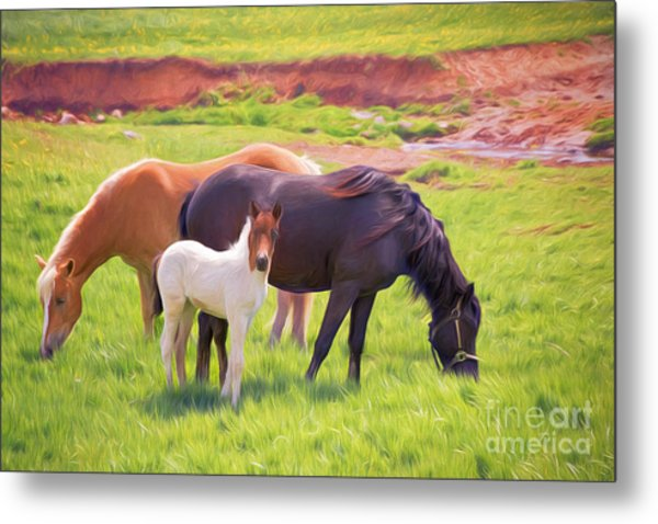 Curious Colt And Mares Metal Print