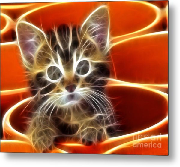 Curious Kitten Metal Print