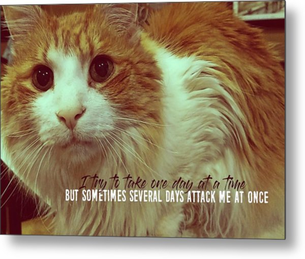 Curious Quote Metal Print by JAMART Photography
