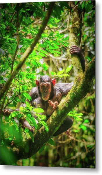Metal Print featuring the photograph Curious by Rick Furmanek