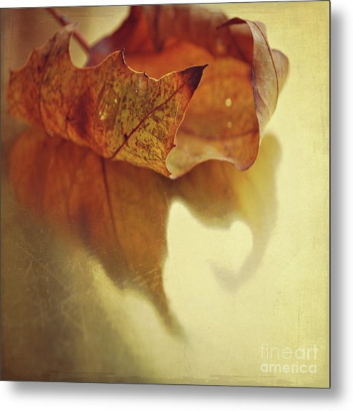 Curled Autumn Leaf Metal Print