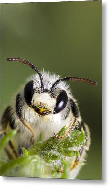 Cute Bee Metal Print by Andre Goncalves