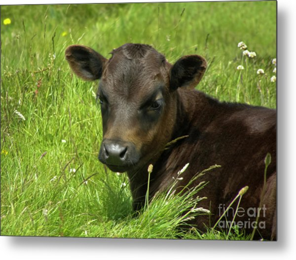 Cute Cow Metal Print