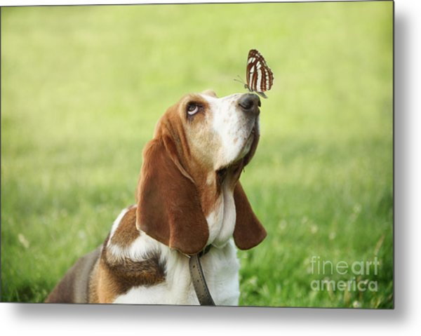 Cute Dog With Butterfly On His Nose Metal Print
