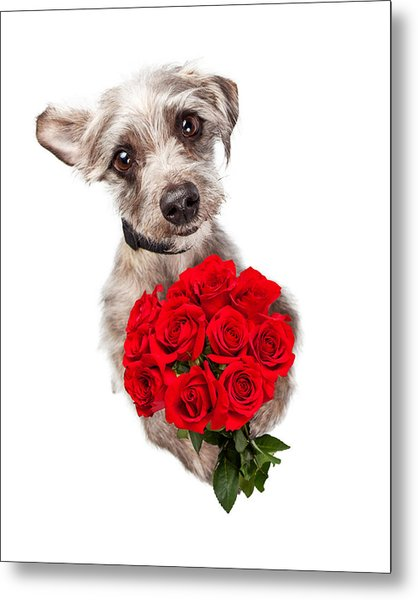 Cute Dog With Dozen Red Roses Metal Print