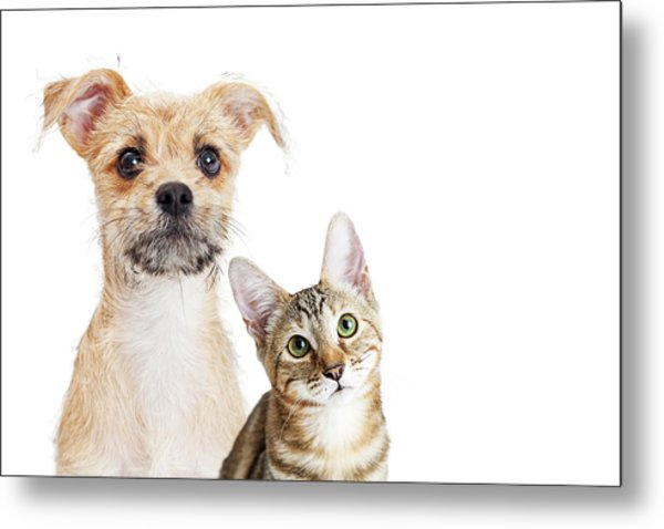 Cute Kitten And Puppy Closeup On White With Copy Space Metal Print