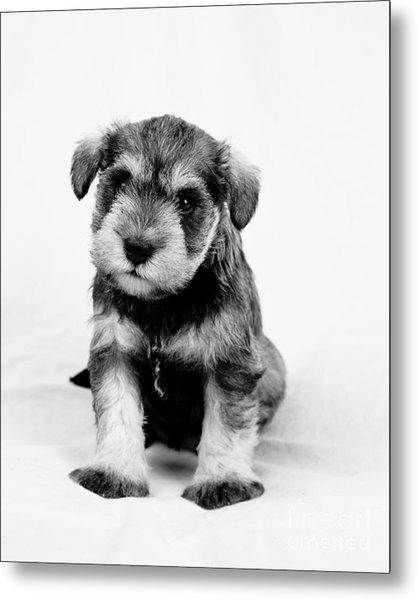Cute Puppy 1 Metal Print