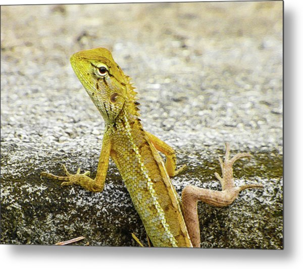 Cute Yellow Lizard Metal Print