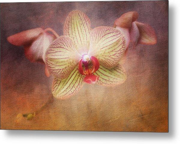 Cymbidium Orchid Metal Print