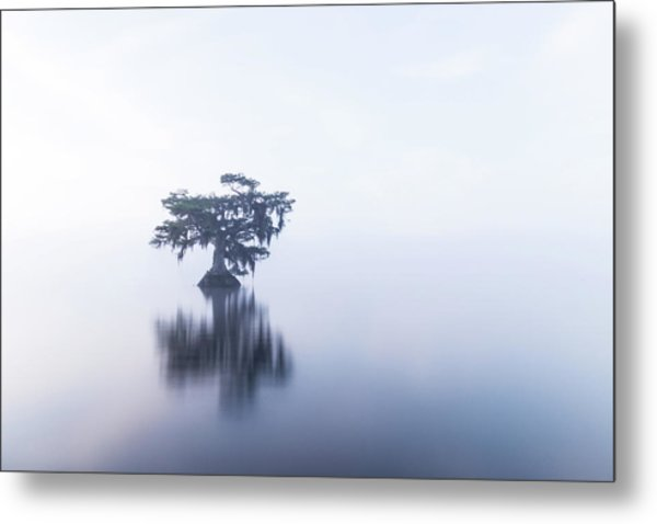 Cypress In Heavy Fog Metal Print