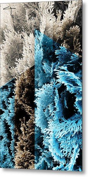Cypress Branches No.3 Metal Print