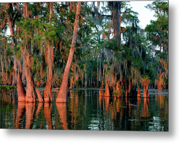 Metal Print featuring the photograph Cypress Grove by Nicholas Blackwell