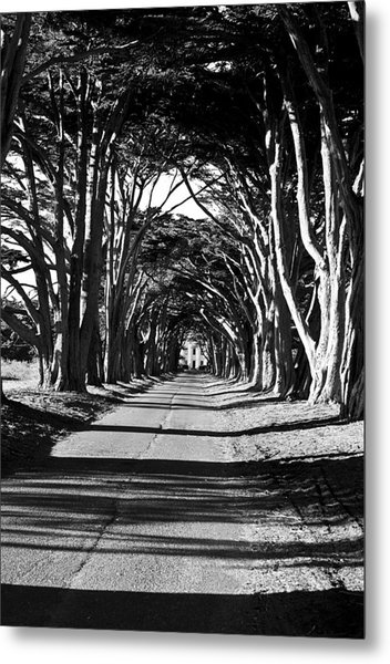 Cypress Tree Tunnel Metal Print