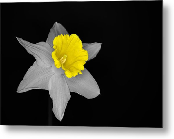Daffo The Dilly Isolation Metal Print