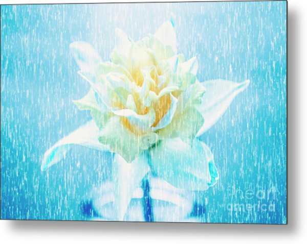 Daffodil Flower In Rain. Digital Art Metal Print