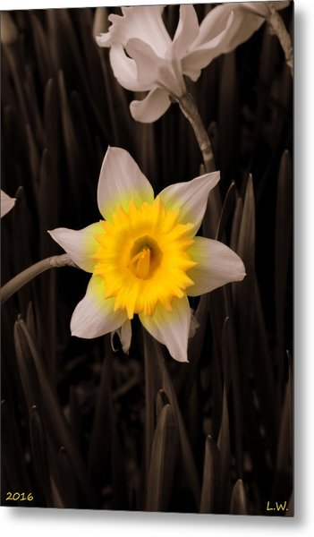Metal Print featuring the photograph Daffodil by Lisa Wooten