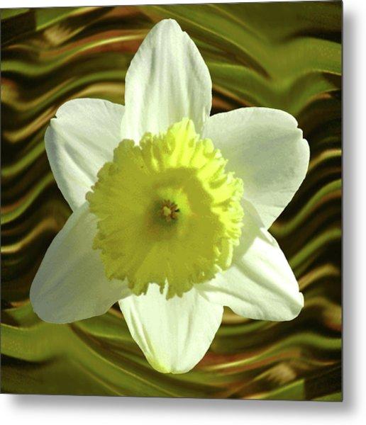 Daffodil Swirl Metal Print