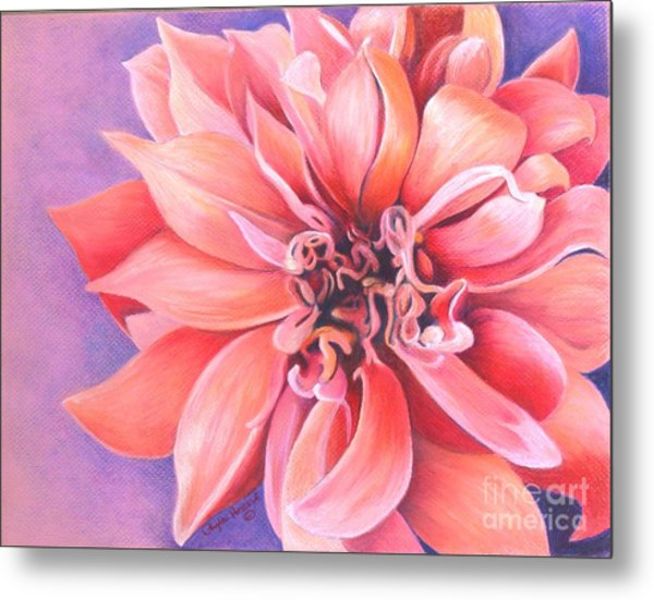 Metal Print featuring the drawing Dahlia 2 by Phyllis Howard