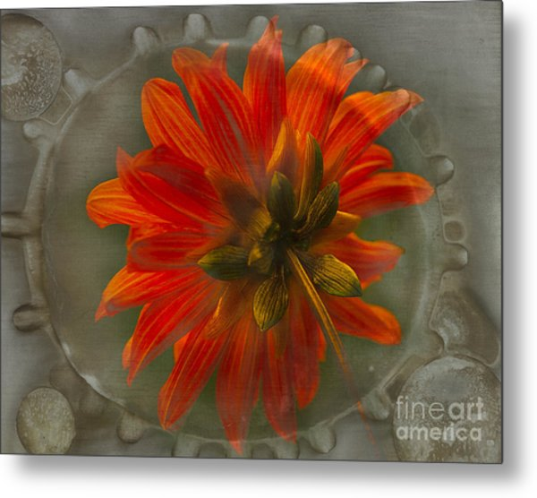 Dahlia 'bishop Of Llandaff' Metal Print