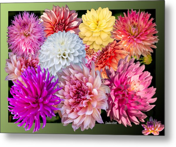 Dahlias Of The Yukon Metal Print