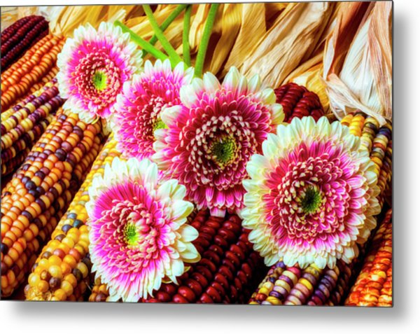 Daises On Indian Corn Metal Print